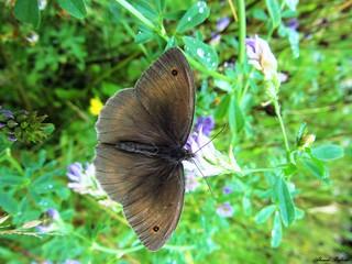 Butterfly 1209