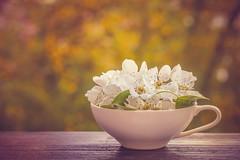 * (clo dallas) Tags: stilllife spring flowers nature bokeh fiori primavera outdoors allaperto canon tazza