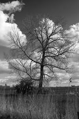 Branches (Martijn A) Tags: tree boom nature natuur landscape landschap sunny zonnig easter pasen blackandwhite zwartwit bw monochrome canon 550d dslr eos ef35mmf2isusm wwwgevoeligeplatennl