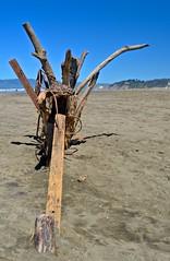 Ocean Beach, art from found objects, sculpture, beach (David McSpadden) Tags: artfromfoundobjects beach oceanbeach sculpture