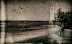 La Corallina's Sunrise (Gianmario Masala) Tags: textures textured photoshop gimp blur blurry photograph gianmariomasala cracked sky water italy monochrome toned blackandwhite photo sunrise seagulls sea sun beach sand springtime island sardinia nikon