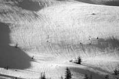 LEO_7873m (MILESI FEDERICO) Tags: milesifederico milesi montagna italia italy iamnikon inmontagna piemonte piedmont primavera wild nikon nikond7100 nital natura nature nat visitpiedmont valdisusa valsusa valledisusa valliolimpiche alpi alpicozie altavallesusa altavaldisusa europa europe d7100 dettagli 2017 cittàmetropolitanaditorino salbertrand