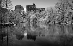 The Pool (Joe Josephs: 3,122,834 views - thank you) Tags: centralpark landscapephotography spring springcolor travel travelphotography joejosephs landscapes outdoorphotography parks relax relaxation tranquil urbanparks ©joejosephs2017 blackandwhitephotography blackandwhite urbanexlporation flowers nyc manhattan newyorkcity springtime