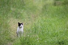 IMG_6120 (Pablo Alvarez Corredera) Tags: burro gato gata gallina rural medio vida hierba alta pradera praderio espigas arbol arboles burrito orejas orejitas gatita