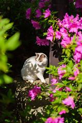 Style (Yakinik) Tags: gf 63mm f28 r wr japan 日本 tokyo 東京 yakinik 富士フイルム fujifilm gfx 50s 猫 ねこ ネコ cat