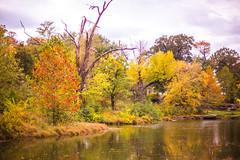Autumn Sweater (Thomas Hawk) Tags: america forestpark missouri mo stlouis usa unitedstates unitedstatesofamerica tree trees