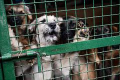 Кожуховский приют (JewishBetelgeuse) Tags: dog shelter homeless takeadogfromshelter puppy