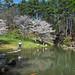 Blooming Dogwoods (Jim Johnston (OKC)) Tags: garvanwoodlandgardens hotsprings arkansas dogwoods pond reflections
