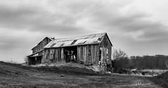 Bailieboro Barn (G. Maxwell) Tags: 2017 ontario zuiko olympus em1 olym1240mmf28 barns landscapeseascape oldbuildings derelictbuildings blackwhite clouds vacant overcast landscape ruralontario