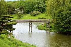 A Bridge to Beauty - Japanese Garden-  Chicago Botanic Garden (Meridith112) Tags: park bridge chicago water garden japanese japanesegarden illinois nikon il glencoe botanic cookcounty willowtree chicagobotanicgarden willowtrees cookcountyforestpreserve nikon2485 nikond7000 abridgetobeauty