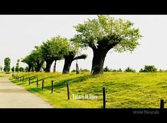 nature in lines (Adrinne -for a better and peaceful world-) Tags: lines landscape raw sidebyside zeeuwsvlaanderen zaamslag steenovens addyvanrooij qualitysurroundings panasoniclumixg2 adrinne greenbeautyforlife