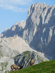 la Marmolada e i suoi abitanti.... (gabrieli_a) Tags: marmolada auta malgaciapela stambecchi montealto roccapietore lacdeigiai