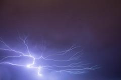 Arbol Electrico
