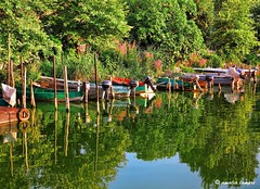 Colors and light at the lake Pamvotis (amalia lam) Tags: light summer plants nature colors canon reflections reeds boats photography landscapes lakes hellas greece ripples distortions ioannina epirus ipiros nisos lakepamvotis amalialampri amalialam