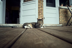 Porch Time (pantagrapher) Tags: cat outside nikon porch d600 moops