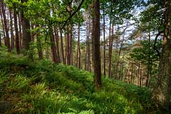 Sylvan Retreat (Non Paratus) Tags: desktop uk trees green forest scotland highlands woods background foyers fallsatfoyers