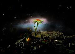 A La Luz de Las Estrellas en La Noche... Margaritas y Algo Mas!!!