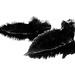 1st Black & White - Tom Cummings - Iguanas 2
