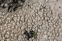 Contorta, then Black (Ruaridh Cameron) Tags: brown white black green yellow circle soft pale fungi lichen rough crunchy circular circling