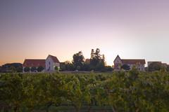 A moment (ccalmeidalopes) Tags: sunset portugal vineyard dusk clear anadia flickrandroidapp:filter=none vision:mountain=059 estaovitivincola