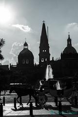 Catedral de Guadalajara (MaritzaSantana - Mxico) Tags: bw blancoynegro fuente catedral guadalajara catedraldeguadalajara calandria nueves maritzasantana httpwwwmaritzasantanacom