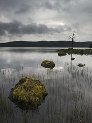 Between showers (- David Olsson -) Tags: morning summer lake nature water clouds landscape early moss nikon rocks gloomy cloudy sweden outdoor stones july fx murky mossy vr lonelytree rainclouds d800 linedup vrmland 1635 1635mm lakescape 2013 saxen betweenshowers starktree lonesometree davidolsson 1635vr sax