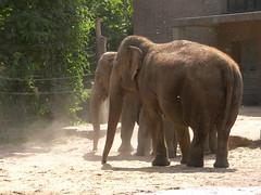 Berlin - Zoologischer Garten (Seesturm) Tags: berlin animals germany zoo tiere europa hauptstadt elefant tiergarten zoologischergarten bundeshauptstadt 2013 seesturm