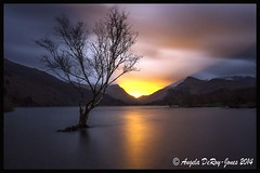 Tree and Sunrise at Llyn Padarn  LE (angeladj1) Tags: longexposure mountain lake tree water sunrise lonetree nationalgeographic northwales llynpadarn