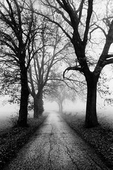 Promenade (p1r0 (Ludovico Poggioli)) Tags: trees bw mist analog landscape pentax 28mm hp5 mx umbria spello ddx