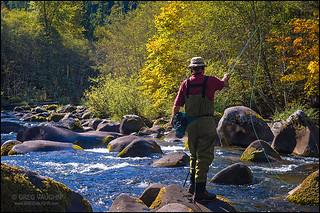 Fly fisherman, Oregon