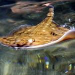 Macduff Marine Aquarium thumbnail