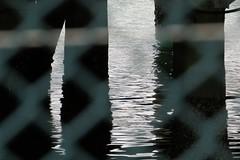 Under the Wharf (SKR_Photography) Tags: wood autumn newzealand water wire shadows auckland wharf nz cbd ripples netting 2014 wynyard underthewharf wynyardquarter autumn2014