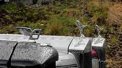 1997 Bentley Turbo R and friends! (Rorymacve Part II) Tags: auto road bus heritage cars sports car truck automobile estate transport azure rr rollsroyce historic turbo vehicle motor van saloon luxury automobiles bentley compact roadster brooklands turbor silvershadow silverspirit arnarge silverspur motorvehicle roadtransport
