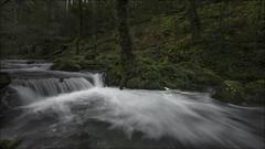 Rincones del bosque (Explore) (Jose Cantorna) Tags: río water agua paisaje landscape nature bosque wood nikon d610