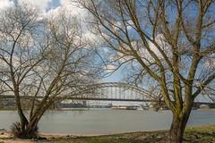 in between (stevefge) Tags: nijmegen gelderland trees bomen rivers waal waalstrand waalbrug railwaybridge water bridges brug landscape nederland netherlands nl nederlandvandaag reflectyourworld