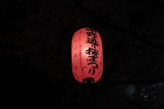 IMG_0542 (digitalbear) Tags: canon powershot g9x markii mark2 nakano dori sakura cherry blossom blooming fullbloom tokyo japan yozakura hanami