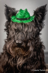 20170410Miss Maggie510-Edit (Laurie2123) Tags: laurieturner laurieturnerphotography laurietakespics laurie2123 maggie missmaggie scottie scottishterrier scotty blackscottie blackdog dog dogs odc odc2017 ourdailychallenge ddc ddc2017 dailydogchallenge cmwd cmwdgreen