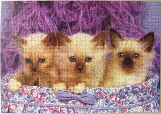 Birma-Katzen / Burman Cats