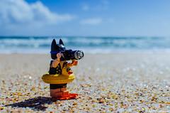 Shooting before swimming (Mr F Ding) Tags: thebatmanmovie batman dccomics lego legophotography legominifigure legofan toyphotography toy nikon newzealand spiritsbay northland afol