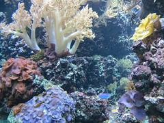 00734912 Aquarium Berlin 1 - 2017 (golli43) Tags: aquariumberlin zoo fische krokodile quallen wasser wasserpflanzen amphibien insekten unterwasserwelt