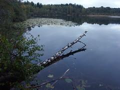 Lake Judarn in Ängby (My Best Images) Tags: judarn lake ängby norra södra