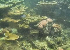 Coral (pochovelas) Tags: canons90 coral marinelife