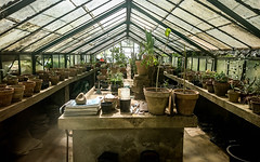 Greenhouse (baiyasu) Tags: palermo botanical garden greenhouse plants italy sicily