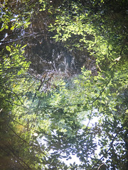Water Reflections (Steve Taylor (Photography)) Tags: water lake newzealand nz southisland canterbury christchurch trees foliage reflection sunny
