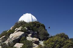 Telescope (Plonq) Tags: arizona vacation travel mountain hill rocks kittspeak telescope buzzard bird nature trees