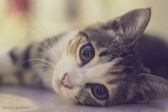 Adorable kitten (BesimIbrahimii) Tags: cat kitten animal animals 50mm canon 18 turkey 2014 alanya antalya