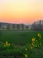 April evening (eikeblogg) Tags: eifel germany april eveningmood sundown landscape sunset seasonal springtime mobilephotography moods field rural countryside natureshots eveningtime