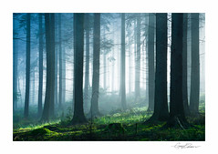 Green Forest (George-Edwards) Tags: landscape forest woodland trees nature sunrise sun light dawn morning daybreak mist fog beams countryside rural outdoor winter seasons berkshire georgeedwards