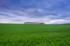 50/50 (Aaron Miller Photo) Tags: wentworth 5050 nikon nikond7100 d7100 aaron miller photography skyporn sky field green landscape photo outdoors manfrotto southyorkshire yorkshire estate