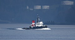 Cindy Mozel (D70) Tags: cindy mozel primarily employed coastal towing pushing island tug's oil barge fleet 1800 hp designed maneuverability imo 7406708 mmsi 316006101 call sign cz 9636 flag canada ca ais type tug gross tonnage 149 deadweight 200 length overall breadth extreme 2332m × 732m year built 1974 sigma 150 600 mm f5 63 dg os hsm contemporary nikon d750 150600mm f563 tc1401 teleconverter silk monopod